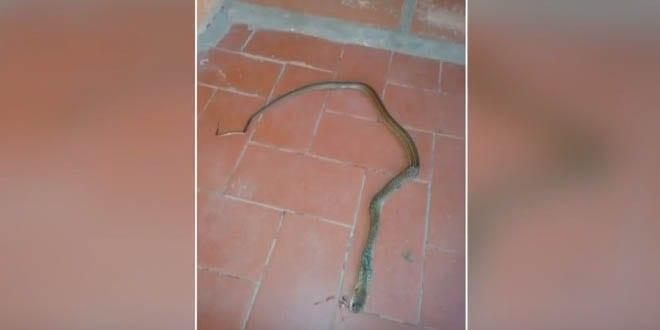 Cobras invadem escola em Santa Maria