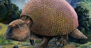 Fóssil de 10 mil anos é encontrado em Alegrete