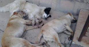 Vereador é condenado por morte de cães e gatos