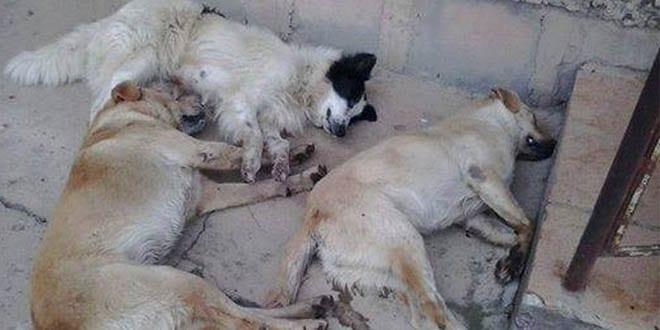 Vereador e mais dois são condenados por mortes de cães e gatos em Bom Jesus